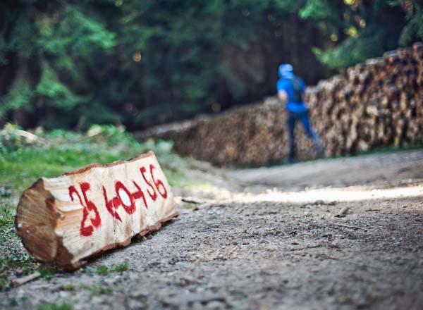 trka bobija-03